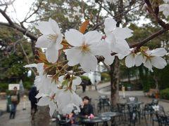 2019年3月長崎旅行2 (グラバー園の桜は満開)