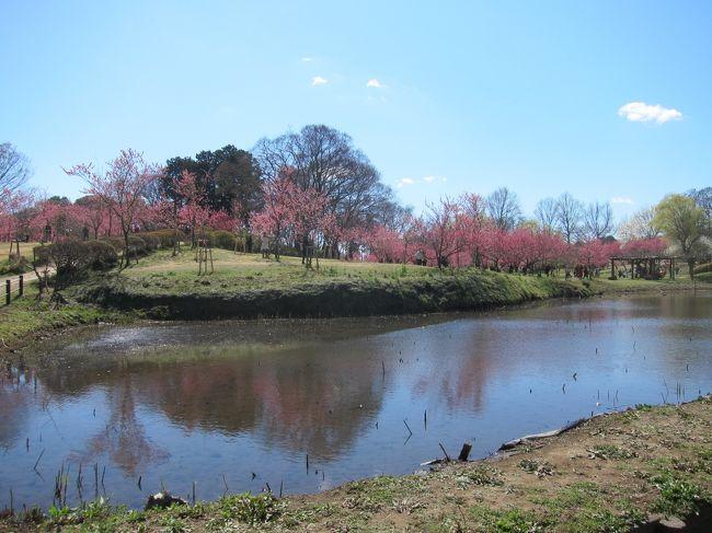 茨城県の「古河桃祭り」に行きました。<br />お天気も良く、桃の花も満開でとても綺麗でした。<br />帰りに「間宮林蔵記念館」にも立ち寄りました。