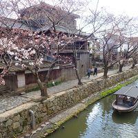 平成最後のお花見� 近江八幡水郷めぐりと三井寺の桜ライトアップ