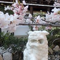 平成最後のお花見⑥ 海津大崎の花見クルーズと近江神宮の桜