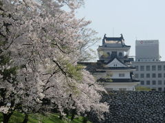 【復刻】北陸路・飛騨路(12)市電に乗って桜満開の富山城址公園