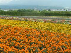 阪急ツアーで行く北海道の旅2 富田ファーム