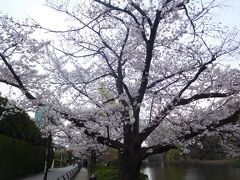 東京2019桜 【2】石神井公園