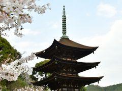 平成最後の一人花見ツアーに行ってきました