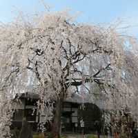 春だ!桜だ!4トラ集合!(六角堂&平野神社&御所&本満寺&XIV八瀬離宮&祇園にしかわ)