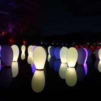 埼玉メッツァヴィレッジ - チームラボ森と湖の光の祭
