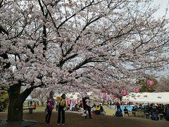 菊陽町のさくら祭り、歴史、食、温泉を満喫ウォーキング