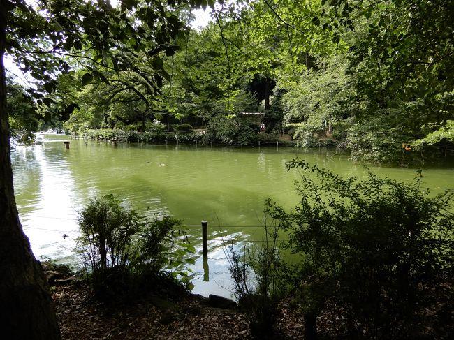 神田川って聞くと何を思い出しますか。フォークグループのかぐや姫の「神田川」が知名度が高いと思いますけど、今回の歩みは歌でなくて都心を東西に貫く神田川で、川下の隅田川から井の頭池まで全長24.6キロメートルあり、特に理由はありませんが川沿いに歩いてみました。<br />24.6キロメートルならば1日で歩けない距離ではありませんが、都心を歩くことで見どころも多く、高田馬場で分割して2日間で歩くことにしました。<br />今回の旅行記は高田馬場から上流の後半部分で、残り約15キロメートルを一人で歩きます。気温30度を超えた日で暑くてバテました。