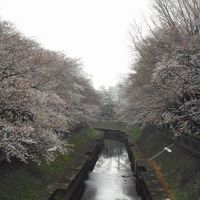 2019年 3月晦日 桜観賞�