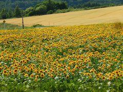 阪急ツアーで行く北海道の旅7 網走のひまわり畑