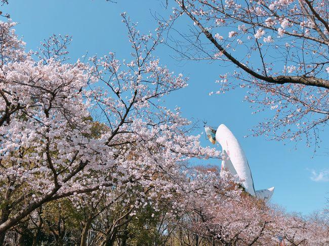 お花見ドライブの2日目は万博公園へ<br />本命のお花見を<br />太陽の塔の迫力に感動!