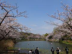 春爛漫 三ツ池公園、入江川せせらぎ緑道 (新年号発表 「令和」)