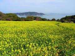 能古島で 菜の花畑に大興奮!