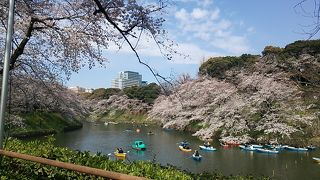 新幹線&青春18きっぷで行く東京の桜見物日帰り旅  2019・03(後編)