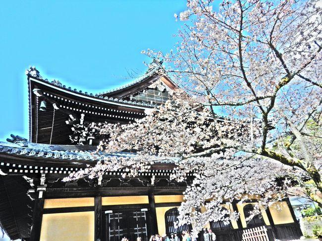 桜の開花に合わせて上京。<br />混むのは覚悟の上でしたが…<br />食事にありつくまでの苦労がハンパなかった。<br />『花より団子』の私たちにとって、<br />思い出に残るお花見となりました(笑)