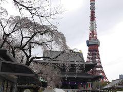 増上寺の桜☆2019/03/28