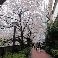 2019年・東京でお花見*目黒川*井の頭公園