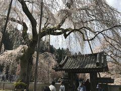 清雲寺のしだれ桜を見に行こう