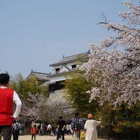 愛媛と香川でお墓参りと花見と温泉と (4) 今年の花見は松山城で