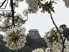 桜の季節の熱海旅行