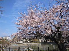 陸上自衛隊三宿駐屯地「桜の通り抜け」、世田谷公園、碑文谷公園でお花見2019年3月