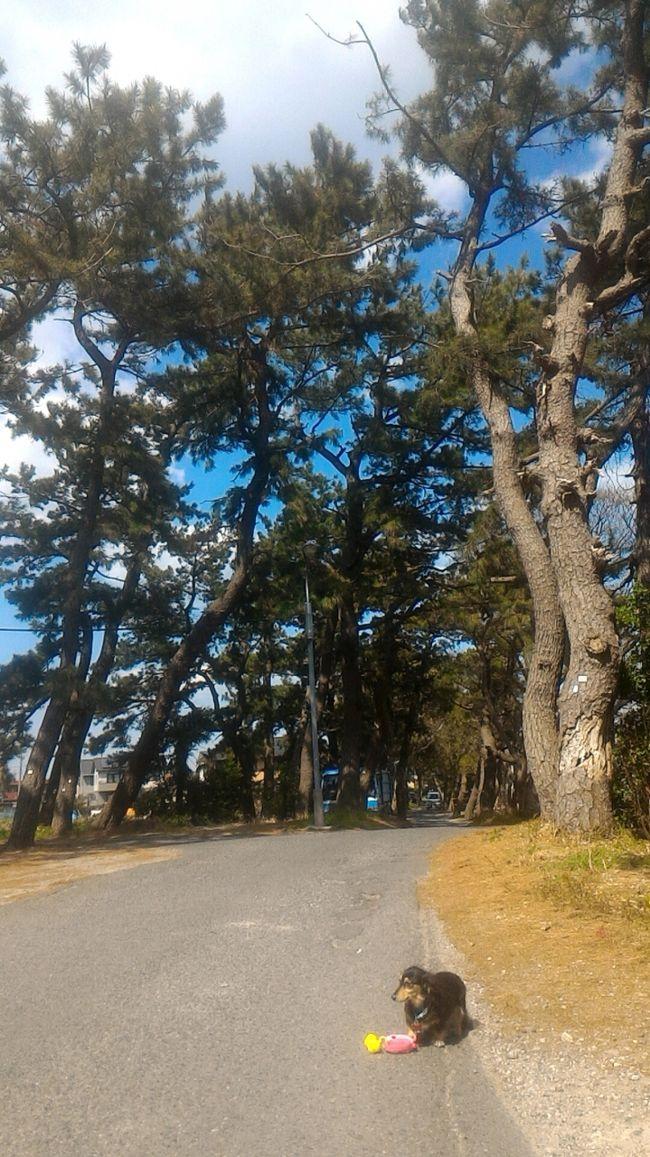 常滑観光[2](展望台や公園やビーチ、常滑の知多四国霊場のお寺を訪れました)
