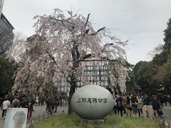 上野で金沢まいもん寿司とスイーツ堪能し、おまけの上野恩賜公園で満開の桜鑑賞
