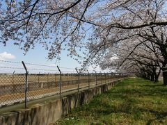 マイナーな桜の名所で・・・静かな花見を