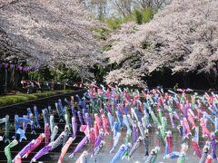 桜の雲 と 虹の川