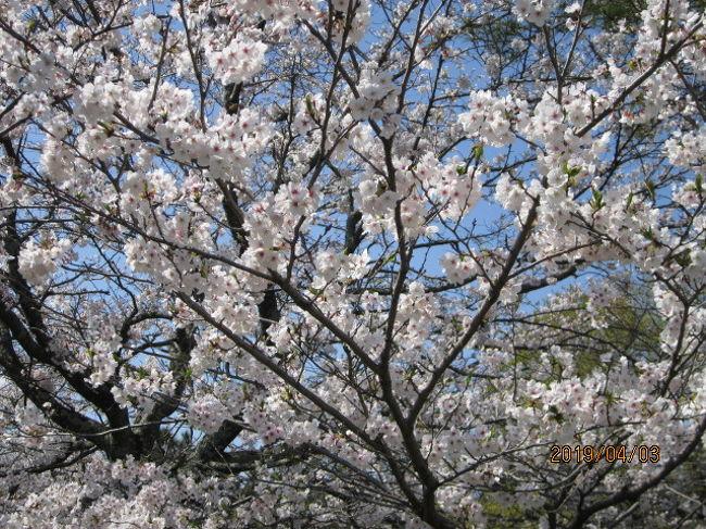 街歩き6・桜満開