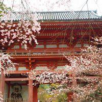 大阪ベースの京都観光2泊3日桜を求めて 2日目