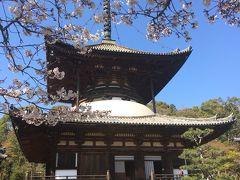 春爛漫の根来寺