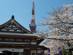 """東京芝公園・増上寺のサクラ~""""333匹の鯉のぼりの東京タワー2019""""を訪れて"""