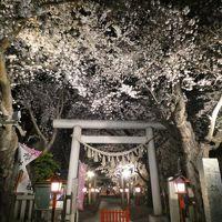 埼玉・鴻巣の夜桜2019〜鴻巣公園と鴻神社のライトアップ〜