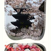 2019年4月 春と桜と古都と。華やかな京都時間♪「東寺」で桜を愛で〜「ヴィナイーノキョート」でランチ〜「霊鑑寺」で椿鑑賞〜