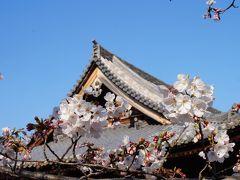 湯浅散策と桜咲く道成寺
