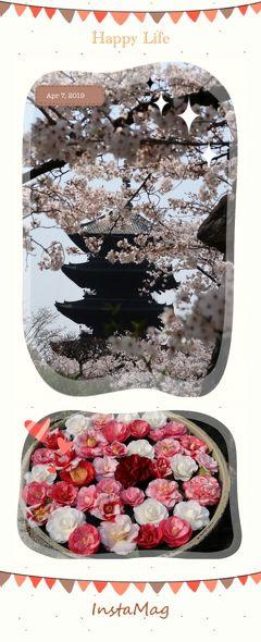 2019年4月 春と桜と古都と。華やかな京都時間♪「東寺」で桜を愛で~「ヴィナイーノキョート」でランチ~「霊鑑寺」で椿鑑賞~