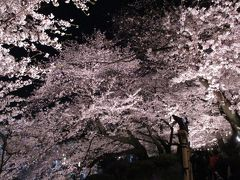 2019年4月 夜桜(千鳥ヶ淵)