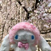京都の桜&オフ会乾杯旅行♪�【錦市場・六角堂・平野神社・本満寺・京都御苑】
