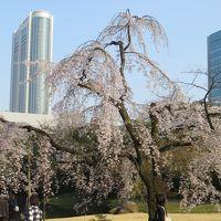 文の郷 文京区内の桜を追って 六義園〜伝通院〜牛天神〜小石川後楽園