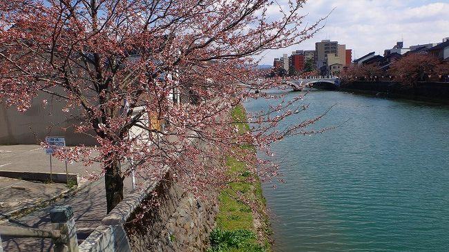 上巻からの続きです。<br /><br />写真は、浅野川の堤防に咲く満開に近い桜。