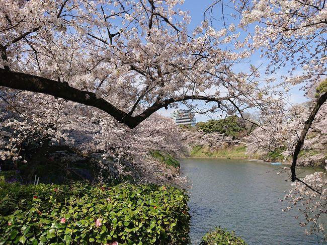 4月5日に今月7日まで一般公開されている皇居乾通りの桜通り抜けに行って来ました。<br />初めての皇居です。<br />坂下門から乾通りを通り、途中から天守台、皇居東御苑に行き、富士見櫓、二の丸庭園などを周り、平川門から竹橋に出ます。<br />皇居の桜は、千鳥ヶ淵に比べるとさほど大したことないのですが、初めての皇居、天守台や二の丸庭園など感動でした。<br /><br />平川門から皇居を出て竹橋でランチを食べ、乾門経由で千鳥ヶ淵緑道の圧巻の桜を見て、最後は靖国神社を参拝して帰ってきました。