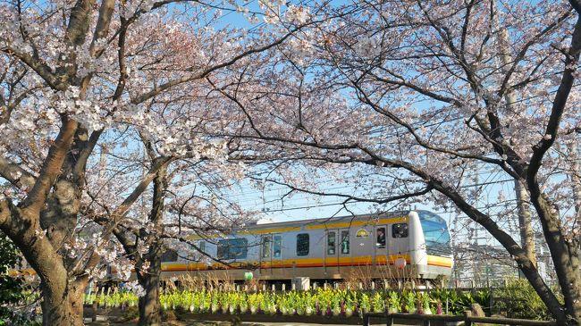 毎年恒例になっている、出勤前のお花見散歩。<br />もう今年はいいかな・・・と思っていましたが、1ヶ所ぐらいは行きたいなと。<br /><br />一昨年はじめて行ってからすっかり気に入ってしまったこちらへ。<br />去年も記録用の旅行記を書きましたが、今年も完全に記録用な雰囲気。桜お散歩記です。<br /><br />▼昨年の旅行記はこちら<br />https://4travel.jp/travelogue/11342920