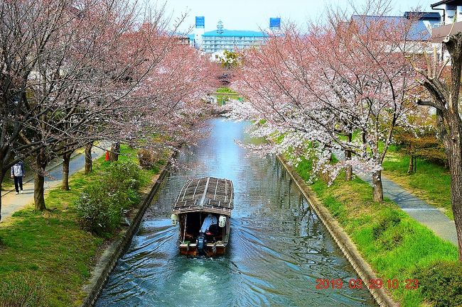 テレビでもやっていたが、最近の京都は観光客が多すぎて大混雑してるらしい・・・(^▽^;)<br />でも桜の季節に京都へ・・・って考え、2019年の年始に早々に例年ならこの時期に桜が満開かなって予想を立てて宿を予約。<br />しっかし・・・ちょっと早かったような・・・<br /><br /><br />3/29(金)<br />自宅⇒東京駅⇒京都駅⇒中書島駅⇒濠川⇒伏見であい橋⇒寺田屋⇒月桂冠大倉記念館⇒中書島駅⇒伏見稲荷駅⇒伏見稲荷⇒出柳駅⇒賀茂川神社⇒鴨川⇒先斗町⇒八坂神社⇒祇園枝垂れ桜⇒祇園⇒石長松菊園(泊)<br /><br />3/30(土)<br />ホテル⇒守山駅⇒安土信長の館⇒豊郷小学校旧校舎群⇒夢京橋キャッスルロード散策~四番町スクエア⇒彦根キャッスルリゾート&スパ(泊)<br /><br />3/31(日)<br />ホテル⇒彦根駅⇒米原駅⇒東京⇒帰宅<br /><br />