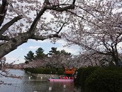 H31年 九華公園の桜