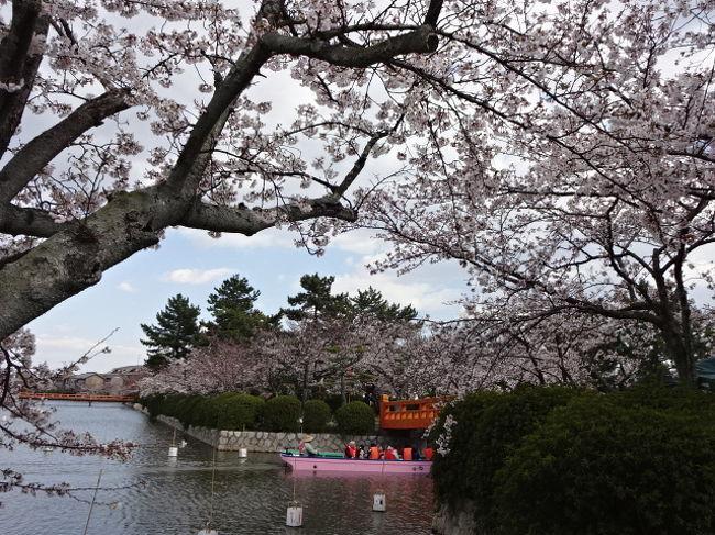 桑名城跡の九華公園に立ち寄りました。<br />満開に近づいていてきれいでした。<br />水に恵まれて花も大きめで見事です。<br />川から見る景色もいいでしょうねー