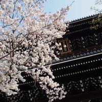 桜を愛でる旅 〜京都〜