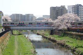 満開の桜を見物しながら京王線の全53駅を自転車で各駅停車してみた(新宿~京王八王子)