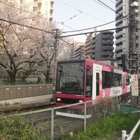 面影橋(東京さくらトラム線)でお花見