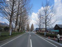 琵琶湖一周  1(メタセコイヤ並木→海津大崎→余呉湖)